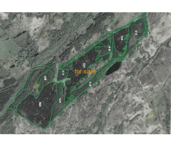 SALE AGREED - 19.35 ha of forestry for sale at Court, Milford, Co Donegal
