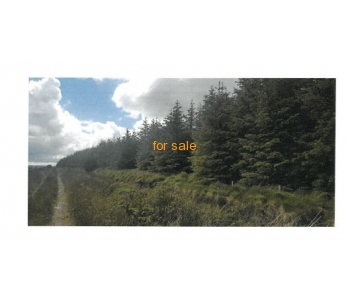 SALE AGREED - Forestry For Sale - 177.55 acres (71.85 hectares).
